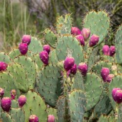 Healing in the Desert: Grow A Drought Resistant Medicinal Garden