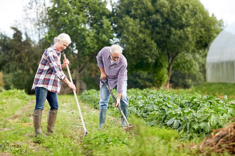 older couple working on a large vegetable garden demonstrating the care farming ecotherapy activity