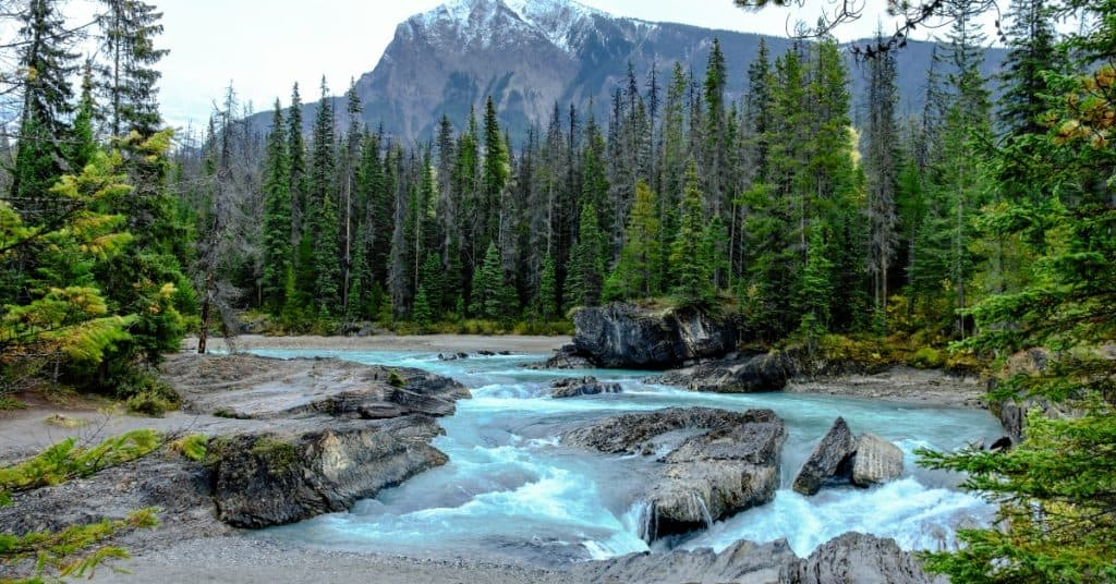 Wilderness therapy calms our minds