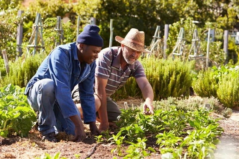 man training a worker in the garden