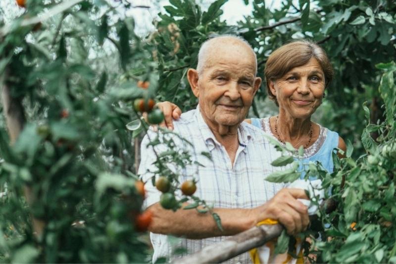 elderly Alzheimer patient working in vegetable garden with therapist