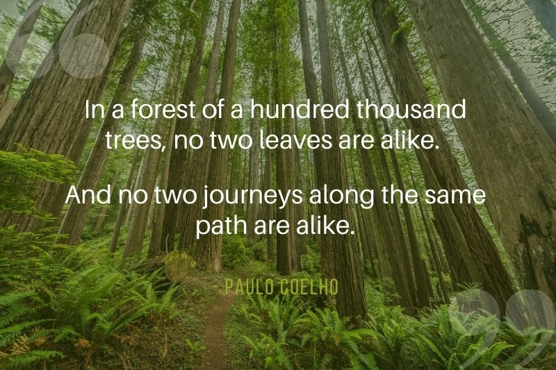 View looking into the forest with quote overlay by Paulo Coelho - In the forest no two leaves are alike
