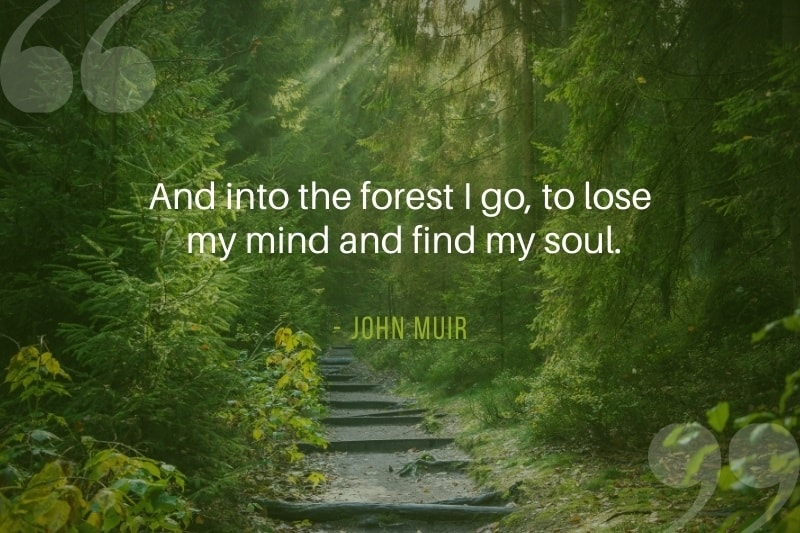Nature path in the woods with quote by John Muir - And into the forest I go