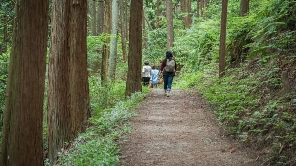 Women forest bathing in Nara, Japan in a forest of Hinoki Cypress