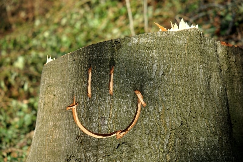 tree with happy face etched on it