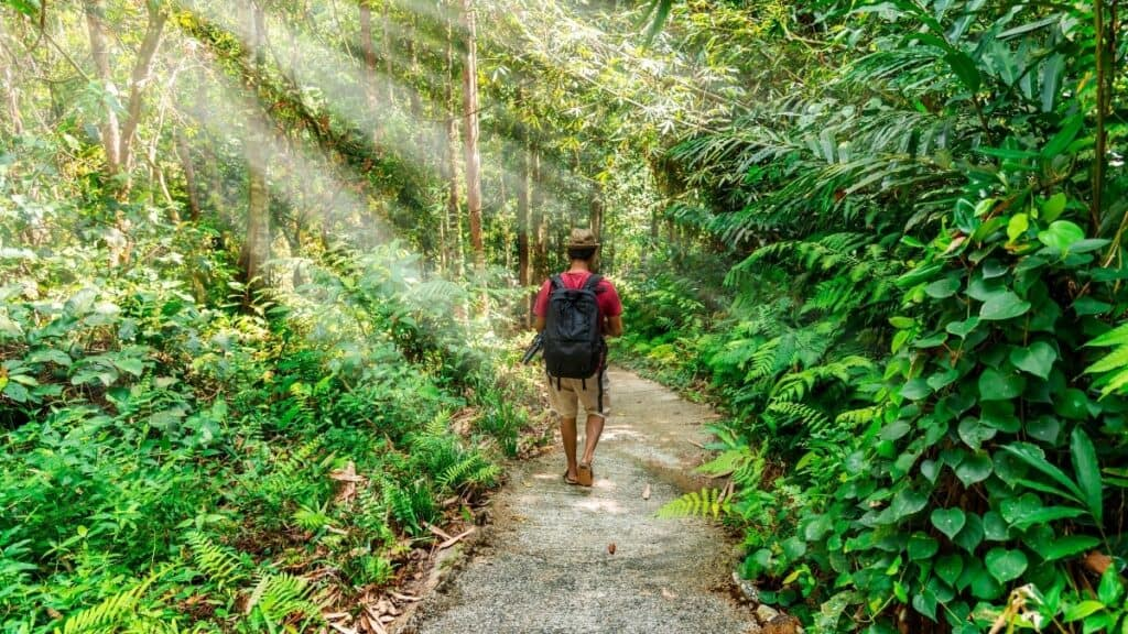 man walking solo into forest with a backpack