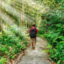 What Is Forest Bathing? Discover The Secrets Of This Japanese Inspired Practice