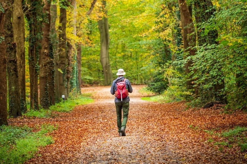 man walking quietly along a forest path