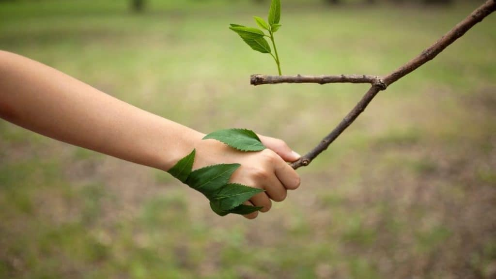 man holding hands with nature - a partnership demonstrating the concept of ecotherapy
