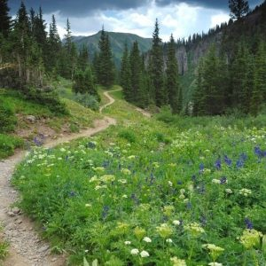 Where To Go Forest Bathing In Colorado – Popular Trails, Parks, and Tours