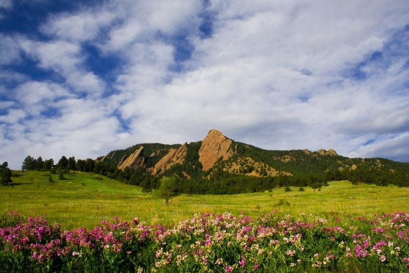 A view of the flatirons in the distance with pink wildflowers in the foreground